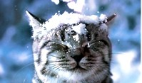 Cat-in-the-Snow-Wallpaper-cats-28363007-1280-1024